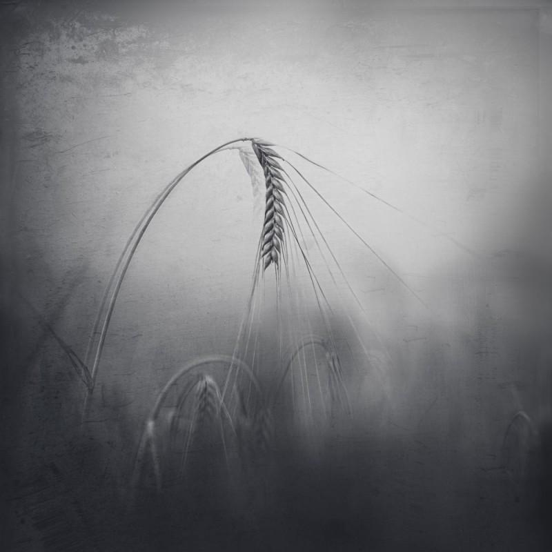 krajina- POD NOHAMA 1